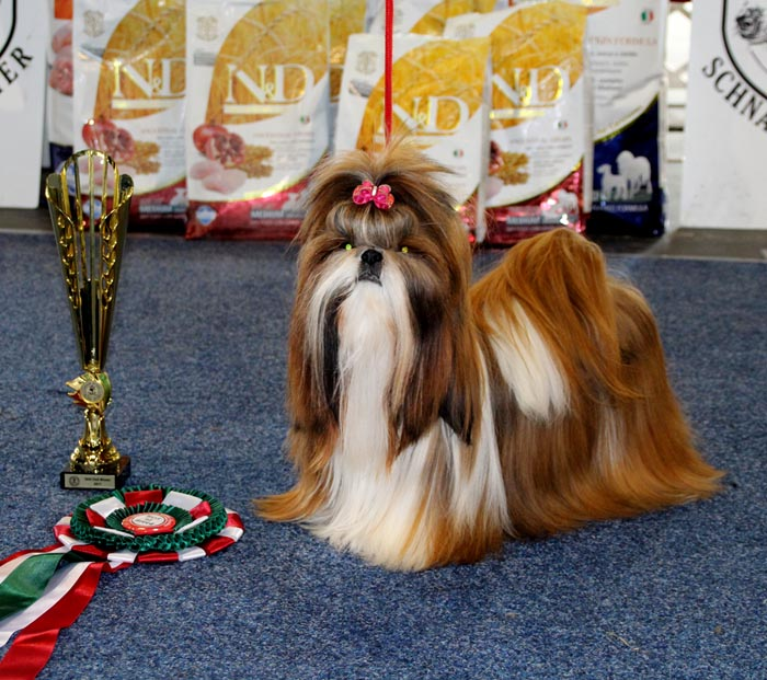 77566c1d7f7c2b International CACIB Dog Show - Skopije 11-12.02.
